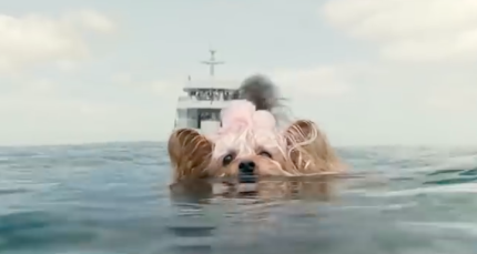 pippin in the meg